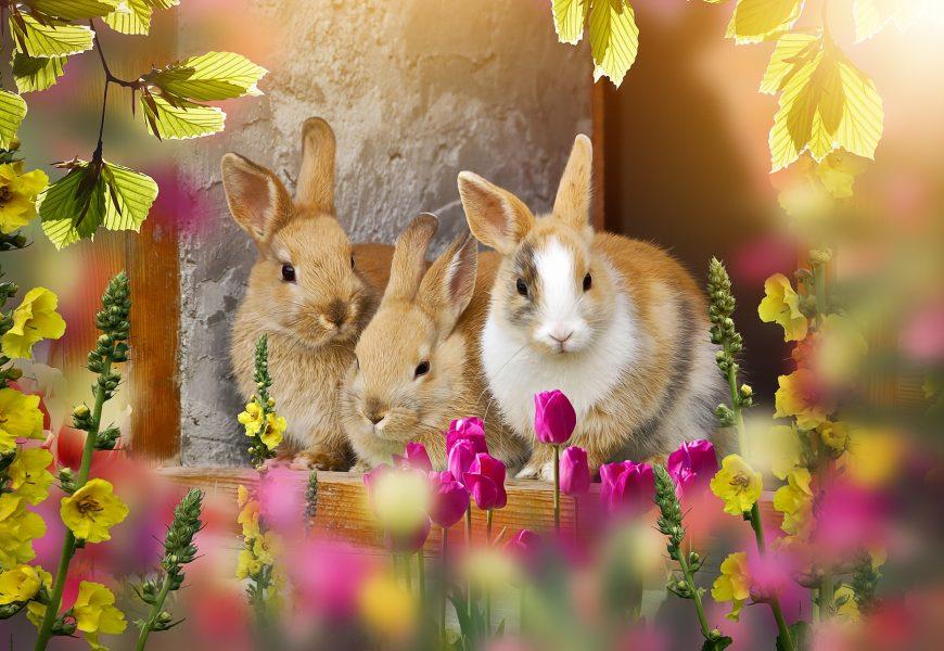 Celebrating Easter|Easter Shopping List